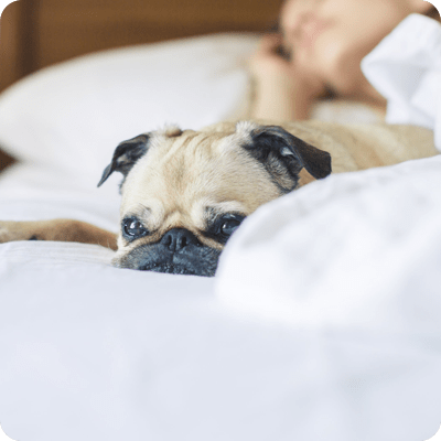 01 Sleeping with Dogs Reduces Depression