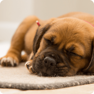 Sleeping with Dogs Increases Sense of Security