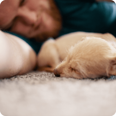 Sleeping with Pets Eases Insomnia