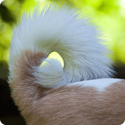 Pet's Tail Fractures