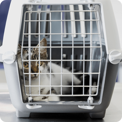 How To Keep Feral Cats Healthy?